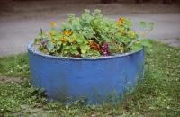 http://clementineroy.com/files/gimgs/th-22_blumentopf.jpg