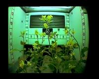 http://clementineroy.com/files/gimgs/th-31_farminginspace_v2.jpg