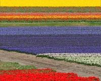 http://clementineroy.com/files/gimgs/th-31_tulipes_v2.jpg